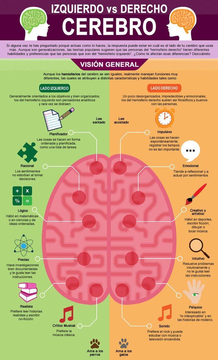 Que hace cada hemisferio del cerebro - Que hace un humidificador ...