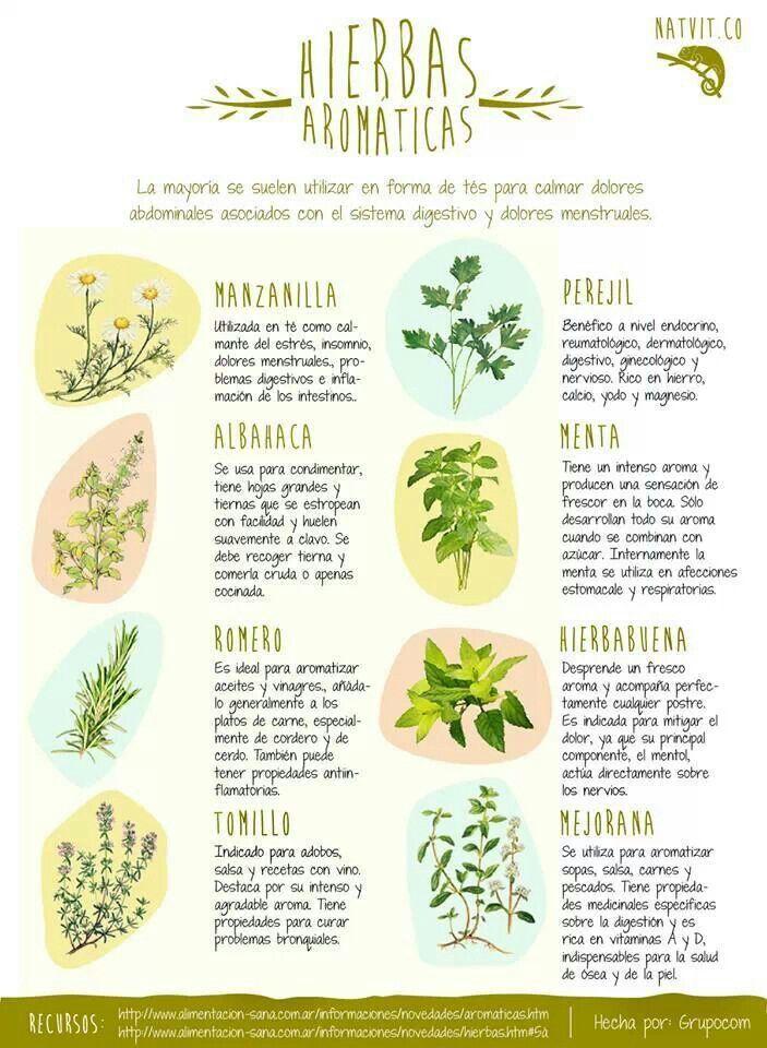 8 hierbas arom ticas con propiedades medicinales for Asociacion de plantas aromaticas