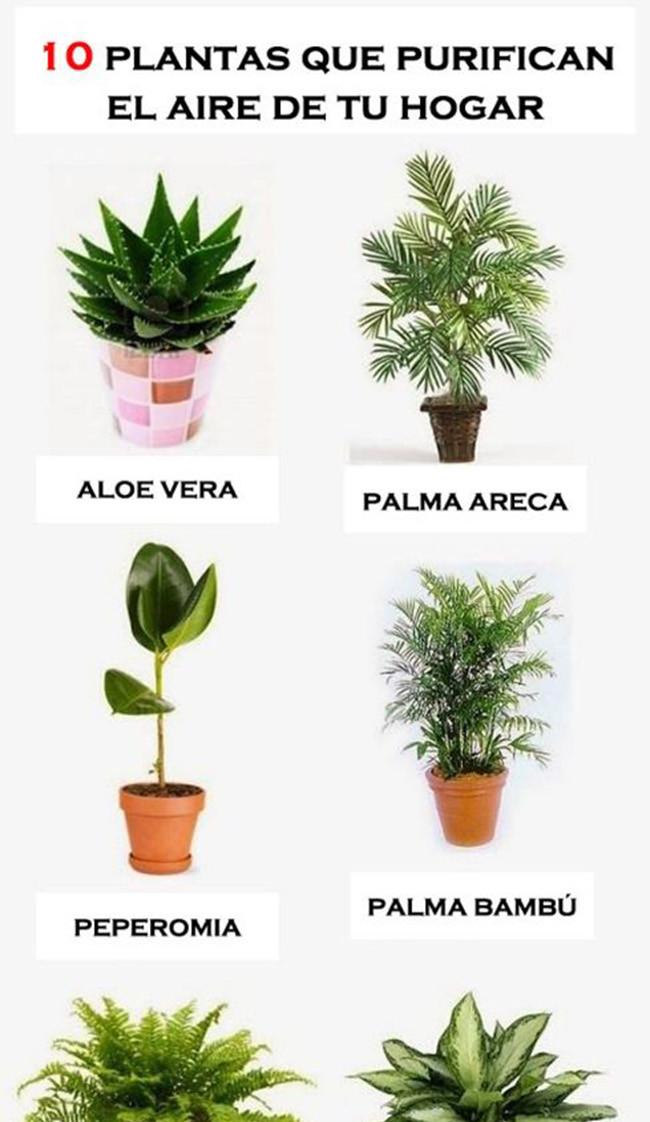 10 plantas para purificar el aire de tu hogar Plantas limpiadoras de aire