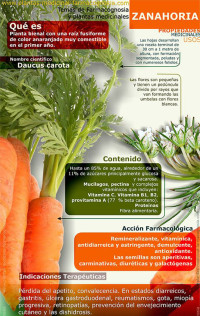 infografía zanahoria