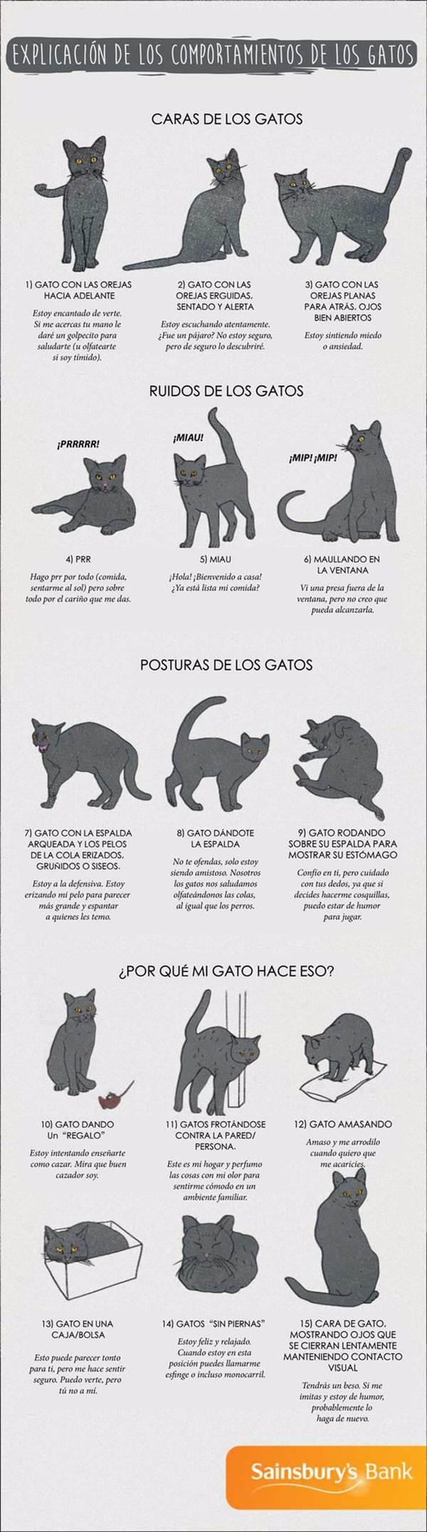 el lenguaje de los gatos en infografía