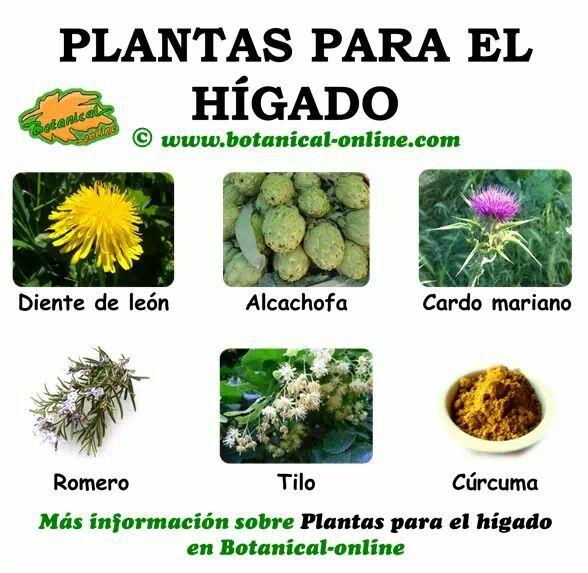 plantas para el higado
