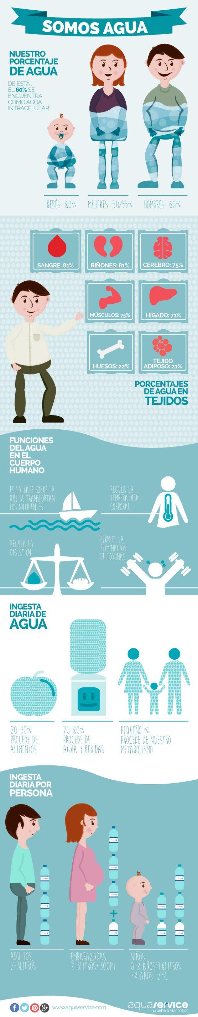 El agua en el cuerpo humano y sus funciones | Infografías y Remedios
