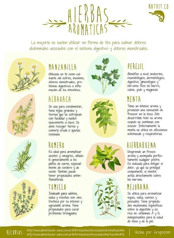 8 hierbas arom ticas con propiedades medicinales for Tipos de hierbas medicinales