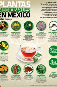 plantas medicinales poco conocidas de Mexico