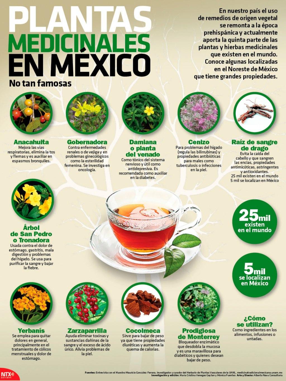Plantas medicinales poco conocidas de mexico infograf as for Plantas que hay en un vivero