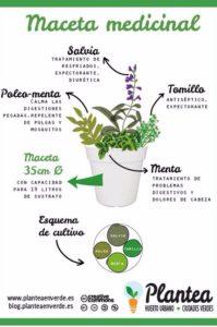 maceta de plantas medicinales