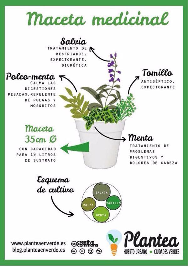 C mo combinar plantas curativas para hacer una maceta for Tipos de hierbas medicinales