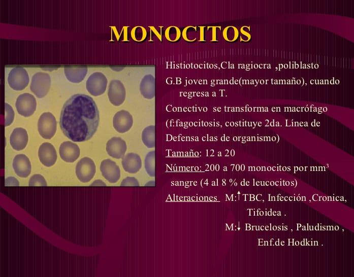 niveles de monocitos altos y bajos en sangre