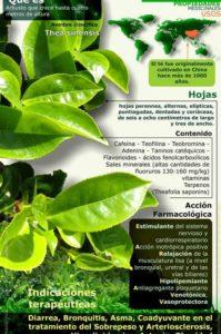 infografía sobre el té